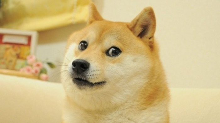 This Shiba Inu is definitely checking interest rates for Dogecoin